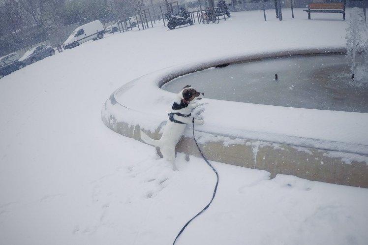 Il y a surement une bêtise à faire ici!!! Montpellier sous la neige avec Yoda - TheChris'sAdventures