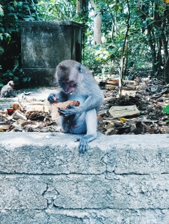 Finalement je mange tout seul - Sacred Monkey Forest Sanctuary - The Chris's Adventures