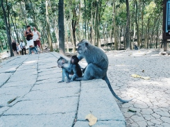 Famille de macaque - The Sacred Monkey Forest Sanctuary - The Chris's Adventures