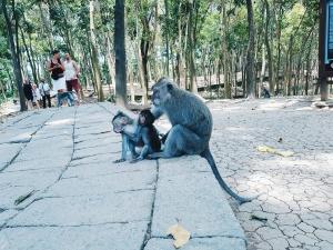 Famille de macaque - The Sacred Monkey Forest Sanctuary - The Chris's Adventures