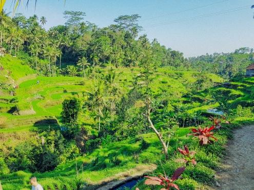 Panorama - Rizieres de Tegallalang - The Chris's Adventures