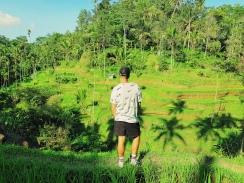 vue magnifique - Rizieres de Tegallalang - The Chris's Adventures