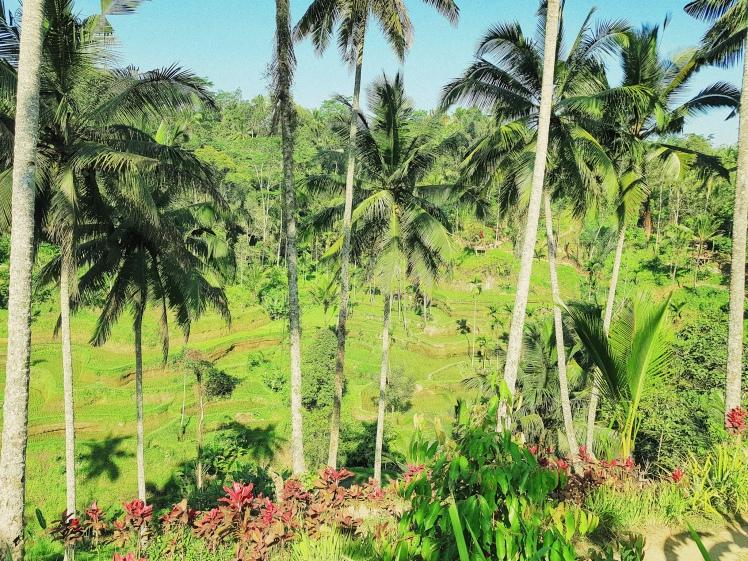 les rizieres de Tegalalang - The Chris's Adventures