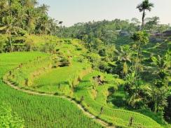 Culture en terrasse 2- Rizieres de Tegallalang - The Chris's Adventures