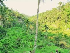 Panorama 2- Rizieres de Tegallalang - The Chris's Adventures